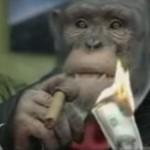 monkey careerbuilder