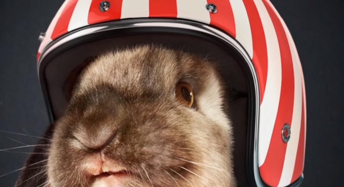 Cannes Lions Sieger – Rabbit Race – Ogilvy